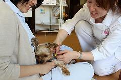 動物のリハビリ治療は必要ですか?のイメージ