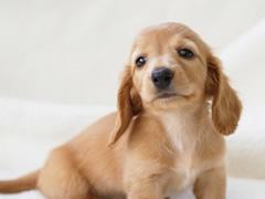 小型犬が普及したことにより、骨折・脱臼が増加しています。のイメージ